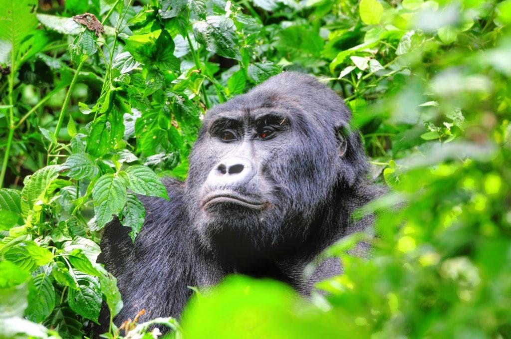 Uganda Ranked Top 4th destination in the world